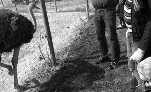 Hugo möter struts På Broby Struts